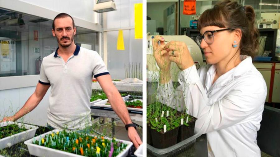 """Argentinos descubren """"apareamiento químico"""" en la fertilización de las plantas"""
