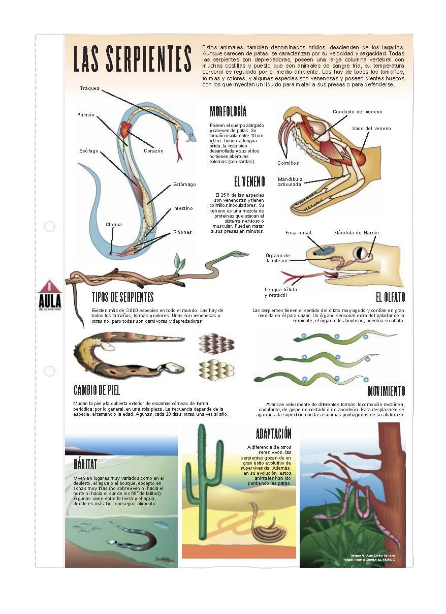 Las serpientes