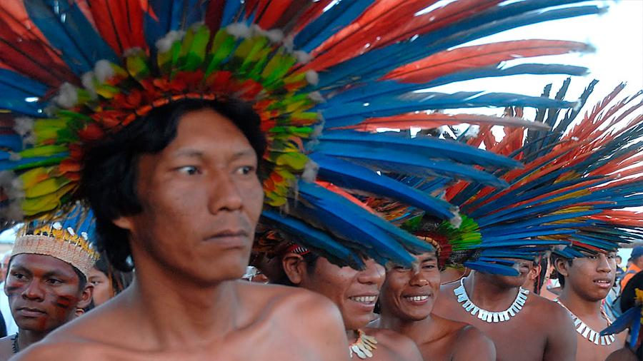 """Se proponen """"árboles del lenguaje"""" para preservar idiomas en extinción"""