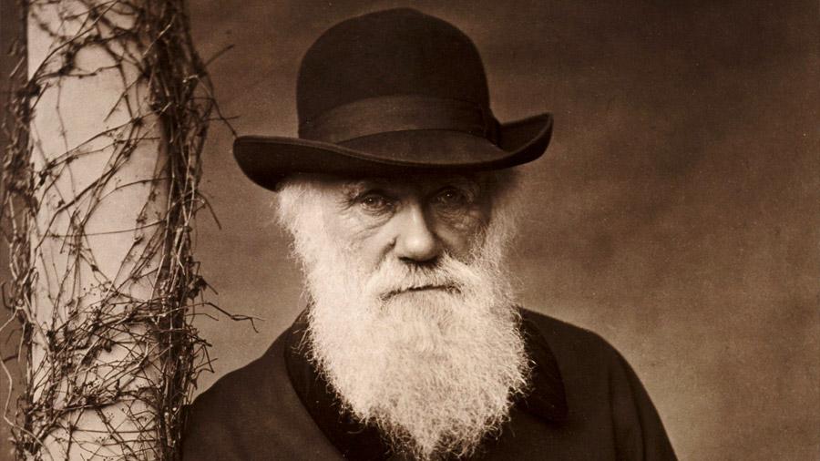Charles Darwin tenía razón en una hipótesis ecológica, pero con matices