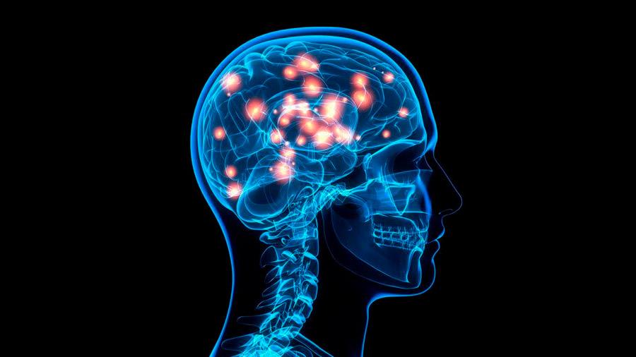 Identifican genes de la inteligencia que podrían servir para tratar enfermedades neurodegenerativas