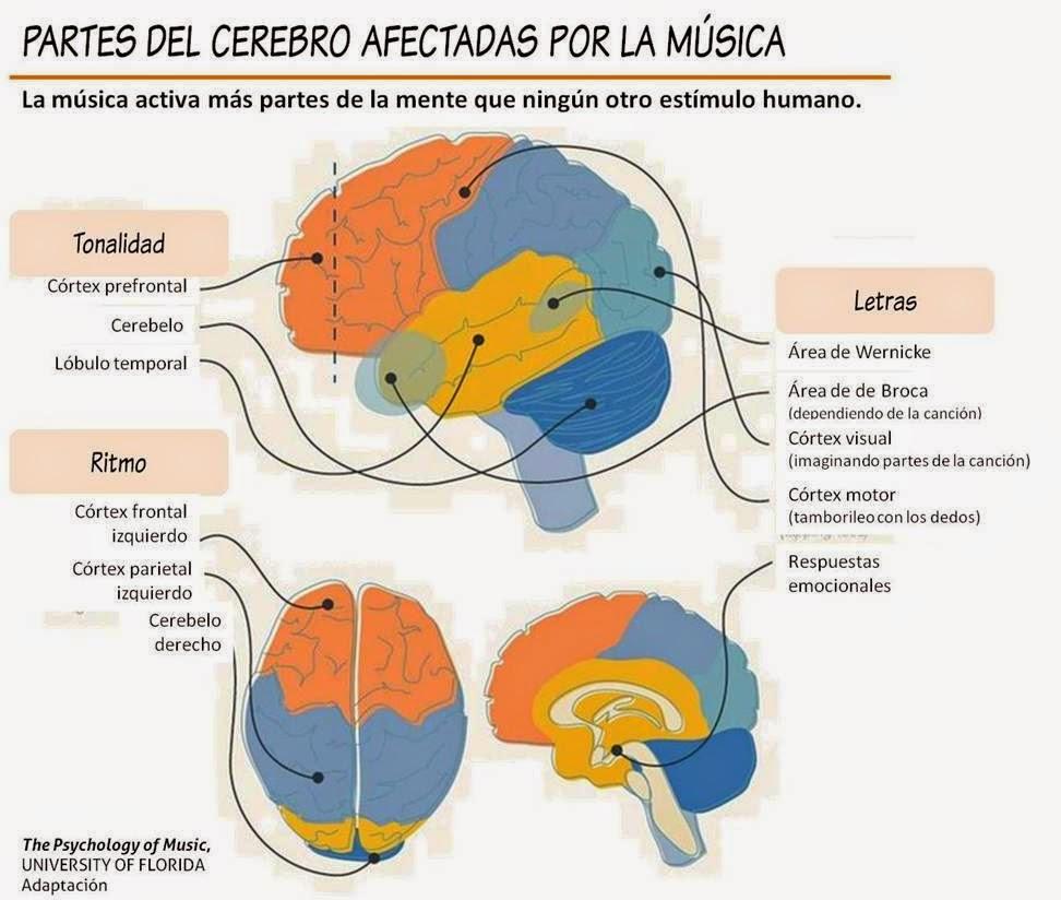 Partes del cerebro afectadas por la música