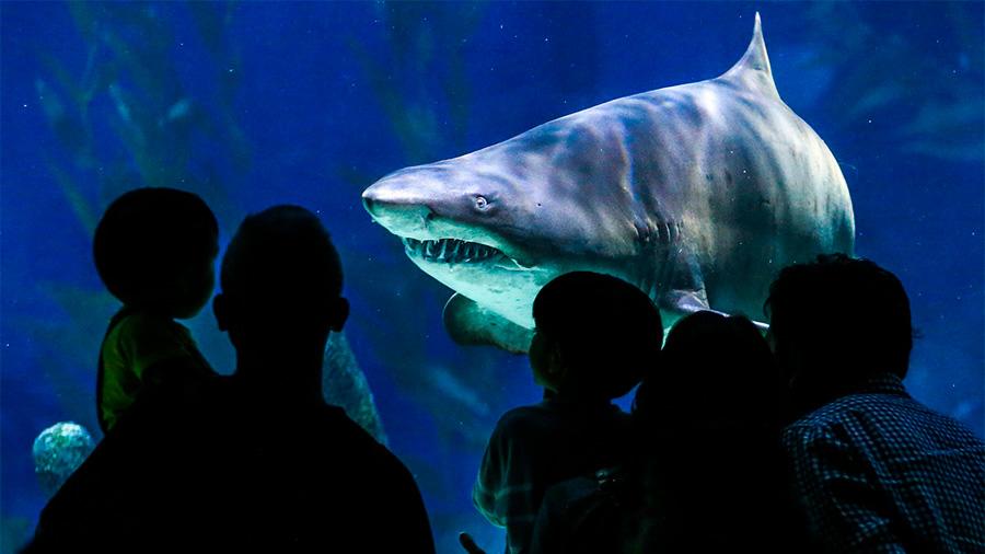 Evidencia de un antepasado común ancestral de humanos y tiburones