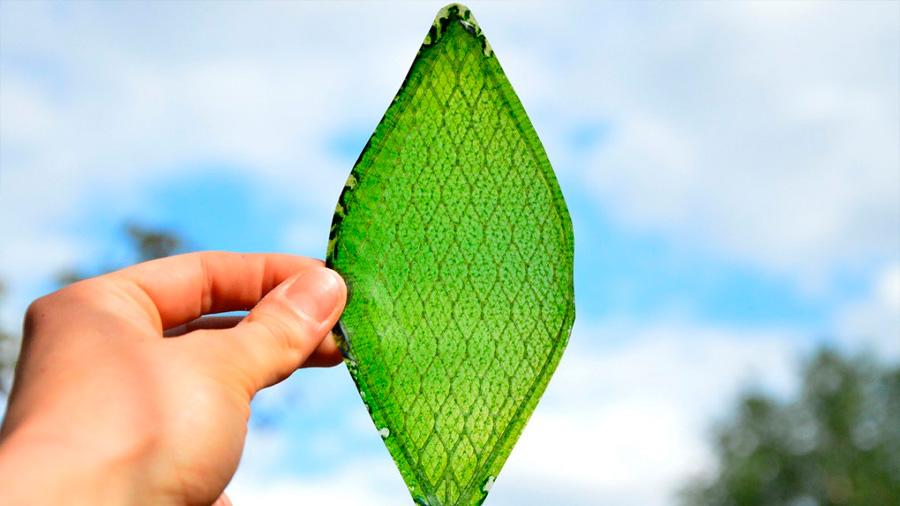 Desarrollan la primera hoja artificial capaz de crear oxígeno