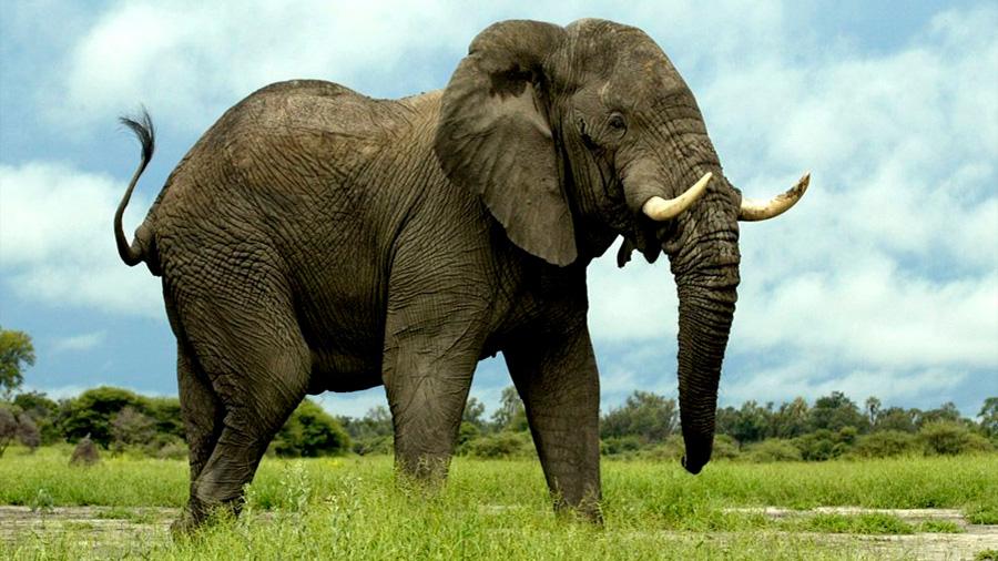 Caca de elefante, dildos para tortugas y otras investigaciones locas de 2017