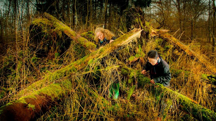 Una empresa danesa de biotecnología tiene un arma secreta en la lucha contra el cambio climático: los hongos