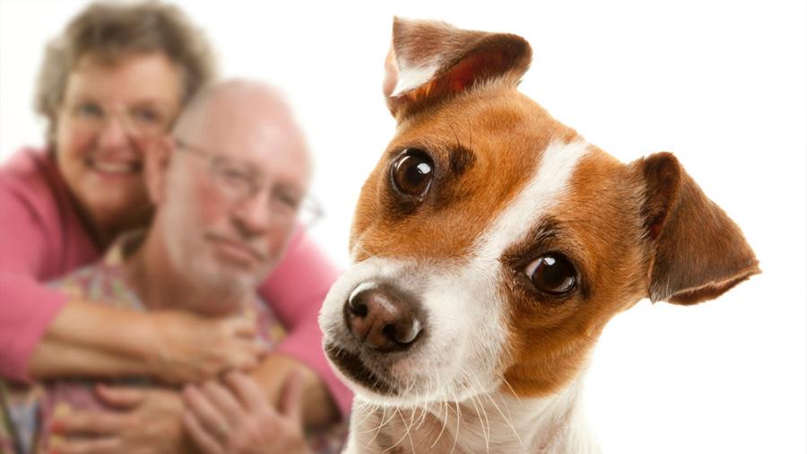 Estudios muestran que los animales también sienten celos