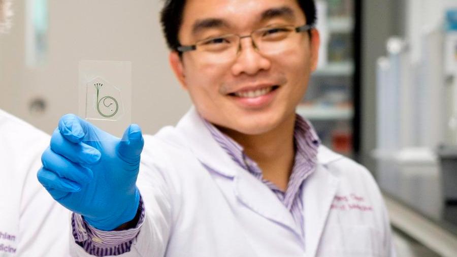Un corazón en un chip para modelar enfermedades humanas