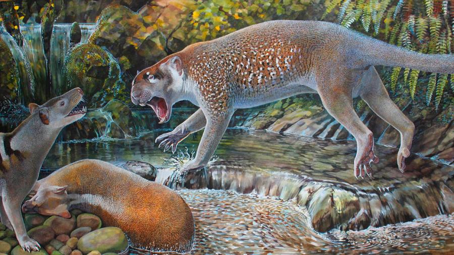 Descubren nueva especie de león marsupial del tamaño de un perro