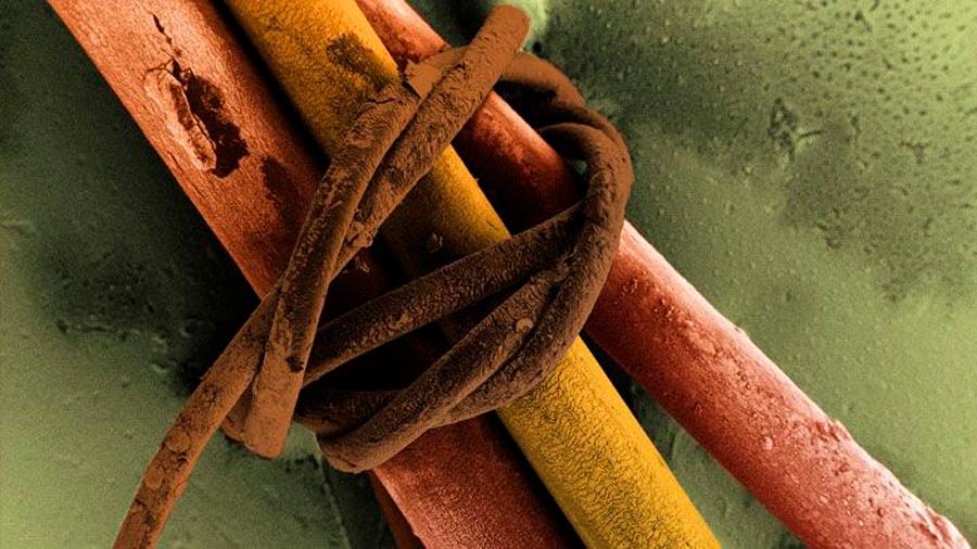 El científico que crea arte con un microscopio