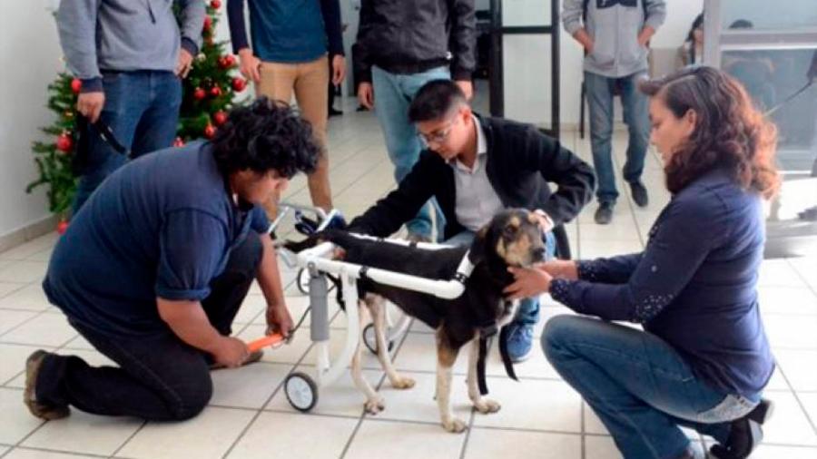 Estudiantes fabrican sillas de ruedas para perros