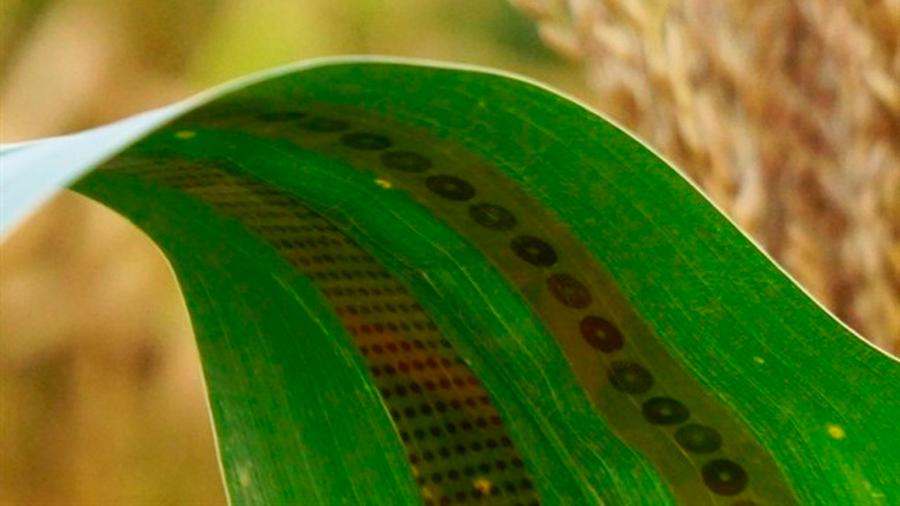 Crean un sistema de sensores de grafeno para plantas que detectan los niveles de agua