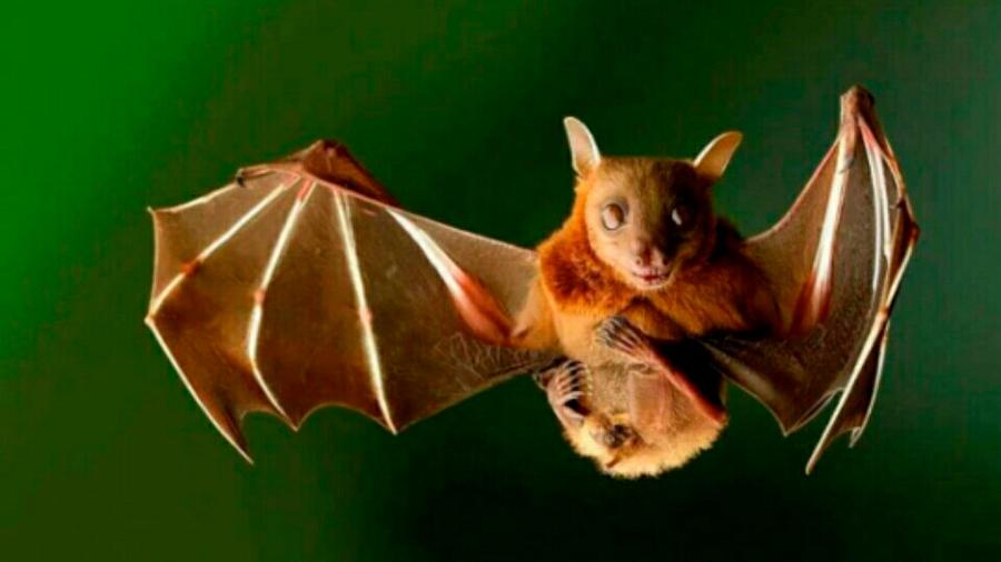 Científicos descubren cómo conocen los animales la posición de sus congéneres