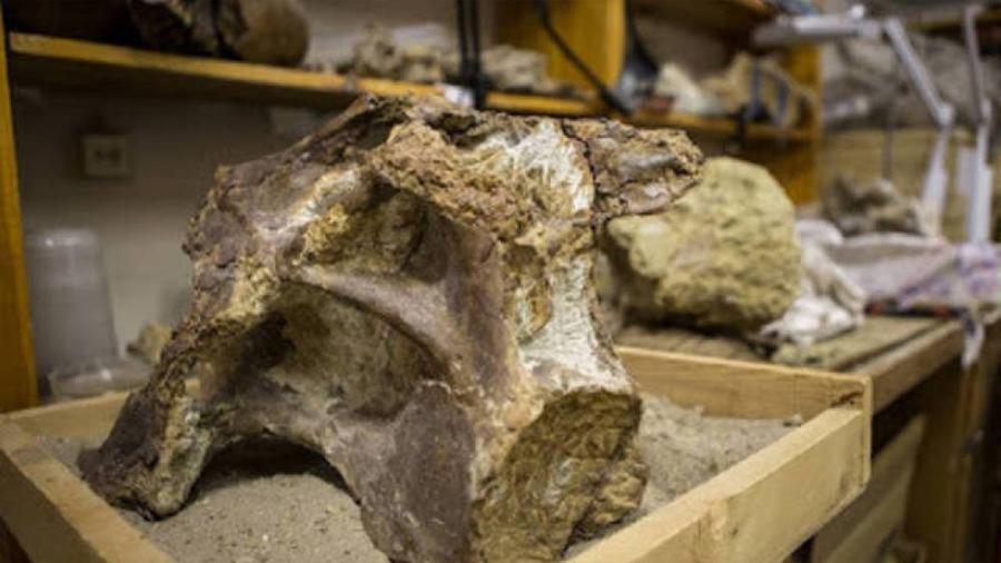Científicos rusos descubren en Siberia una nueva especie de titanosaurio