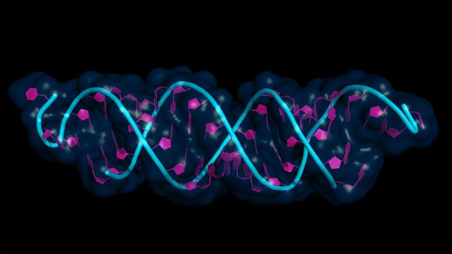 Investigadores descubren procedimiento para rejuvenecer células