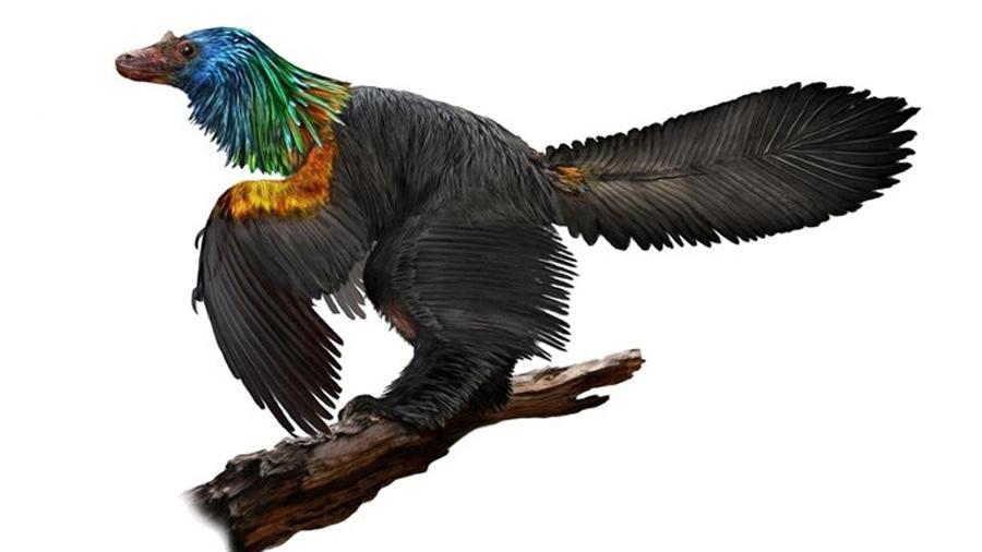 Primer dinosaurio adornado con un collar de plumas arcoiris