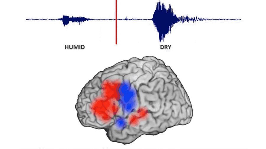 Logran seguir el movimiento de un pensamiento a través del cerebro (y explica por qué hablamos antes de pensar)