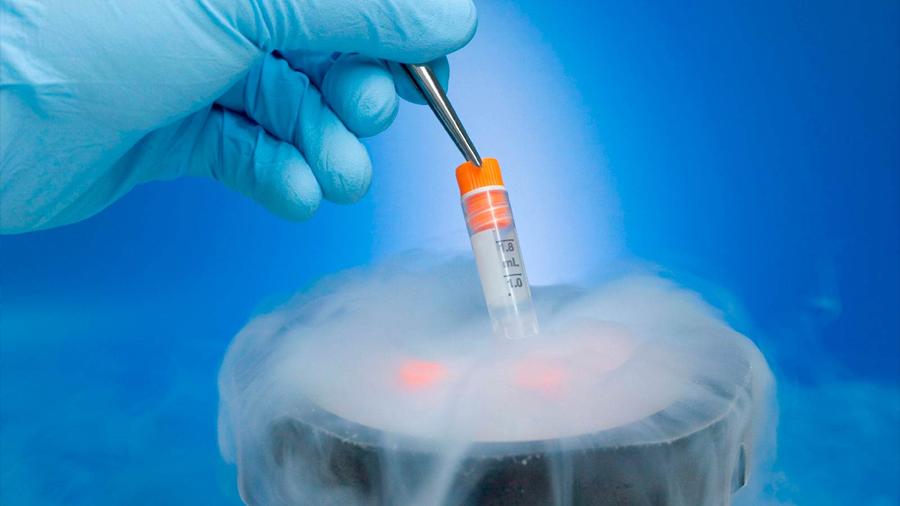 ¿Cómo congelar los tejidos orgánicos o los cultivos celulares sin dañarlos?