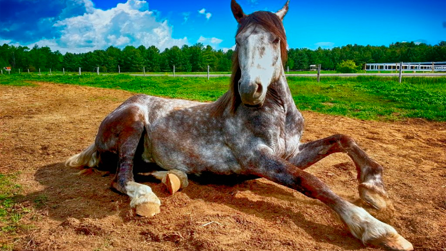 Los caballos conservan restos de sus cinco dedos ancestrales