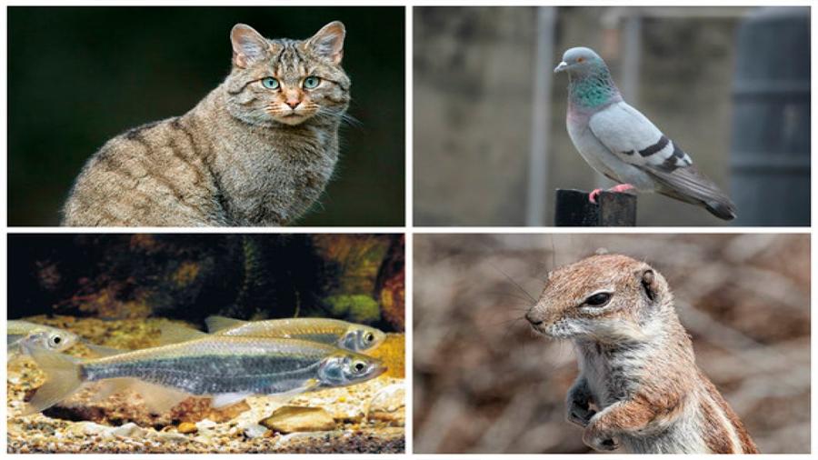 Lanzan Atlas de las especies invasoras que amenazan la biodiversidad