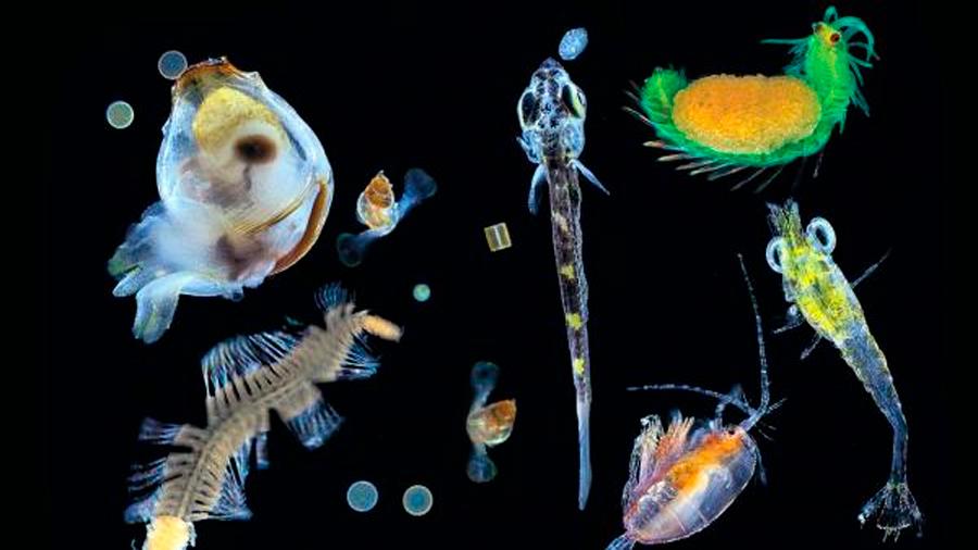 Tara Oceans : descubren 117 millones de genes en plancton