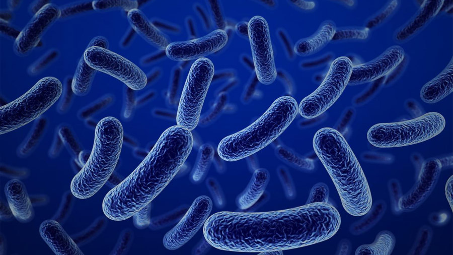 Un antibiótico olvidado ofrece esperanza contra las peores superbacterias