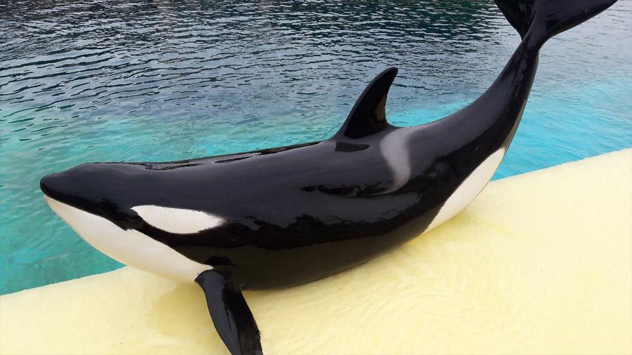 """Wikie, la primera ballena orca que puede imitar el habla humana diciendo """"hola"""" y """"adiós"""""""