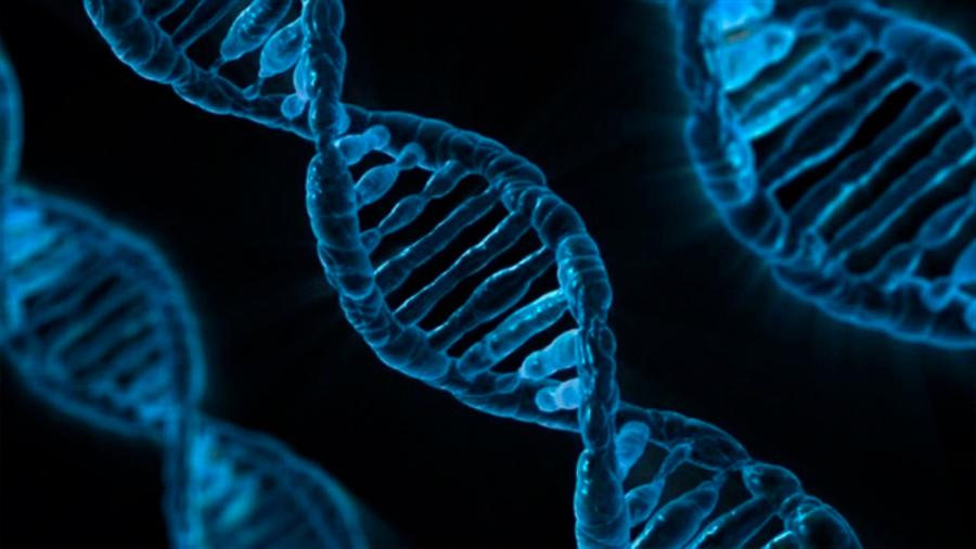 Un temporizador mutacional está integrado en la química del ADN
