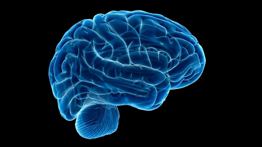 Descubren las células del cerebro que provocan la ansiedad