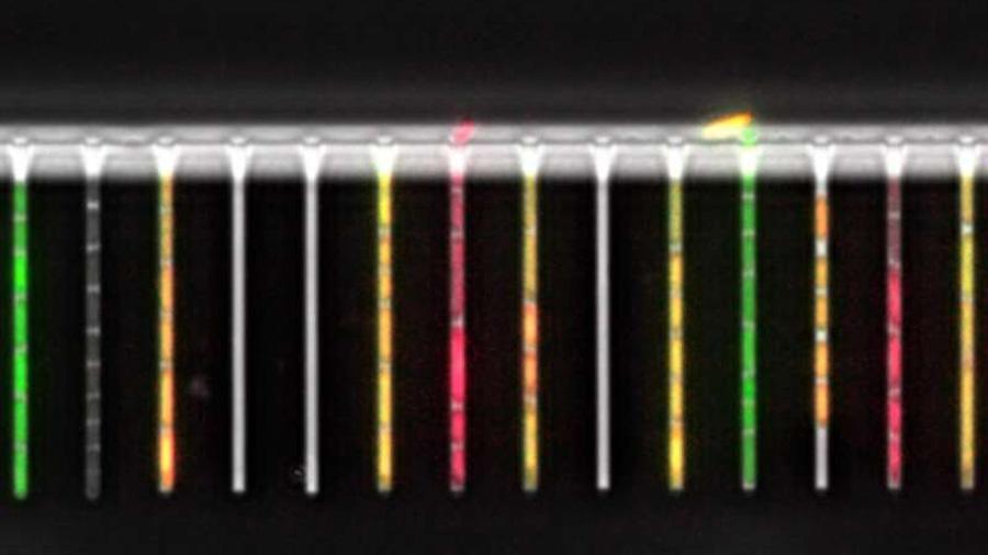 """Ponen en marcha un """"laboratorio en un chip"""" para hacer seguimientos a bacterias individuales"""
