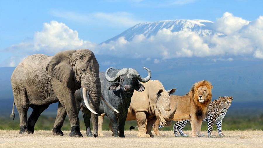 En la Tierra hay más especies de mamíferos de lo que pensábamos