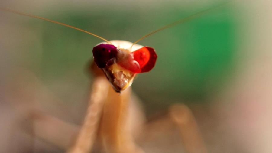 La mantis religiosa muestra una nueva forma de visión 3D