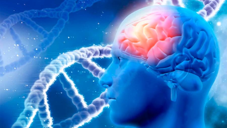 Ha llegado la revolución de las neurociencias