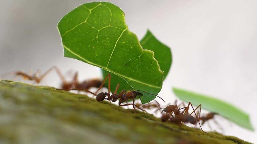 Hormigas, terremotos y anarquía; la belleza de los sistemas auto-organizados
