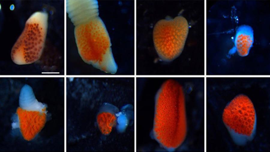 Las estrellas de mar de las profundidades tienen un fascinante sentido de la vista (y está en sus patas)