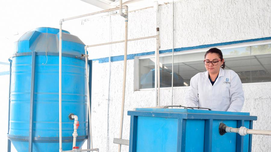 Centro de investigación crea metodología que remueve contaminantes de curtidurías y revalorizan sus residuos
