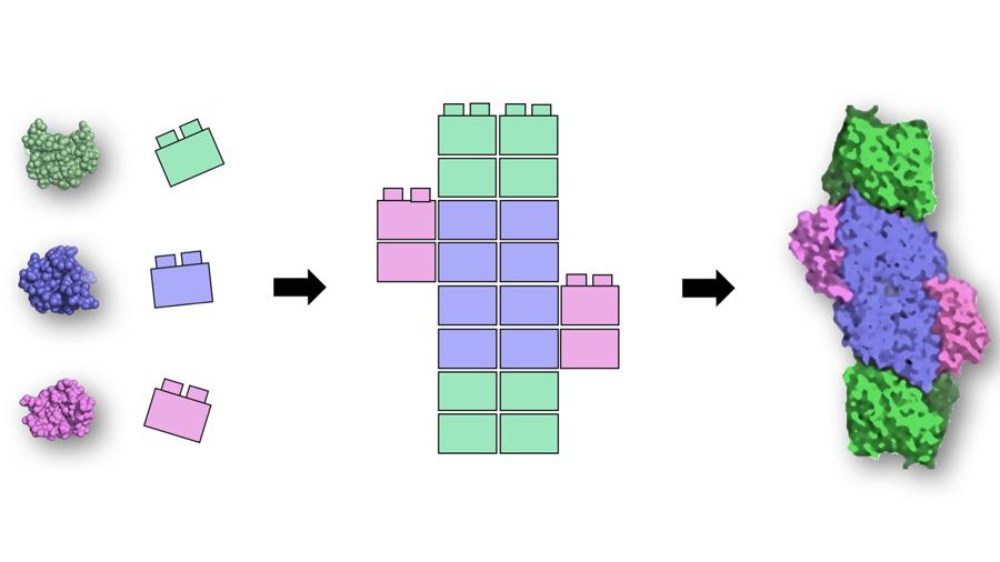 Descubren los Legos de la vida tras el análisis de cerca de 9,500 proteínas