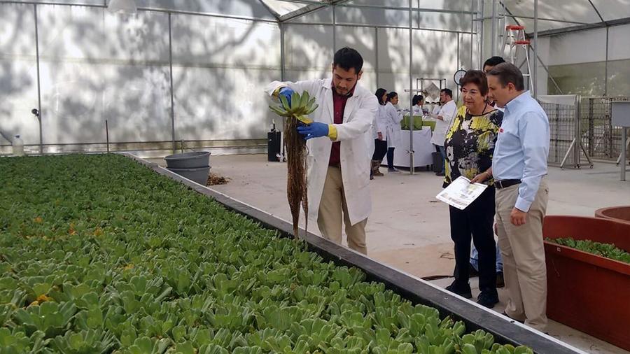 En México, opera la primera biorrefinería de cuarta generación que produce biocombustibles empleando microalgas y aguas residuales