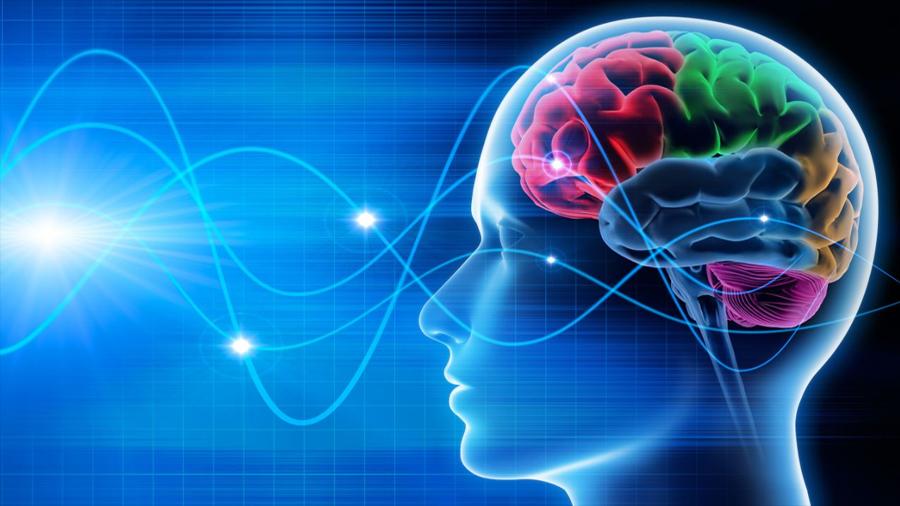 Cuidado con lo que piensas: han logrado reconstruir imágenes a partir de ondas cerebrales