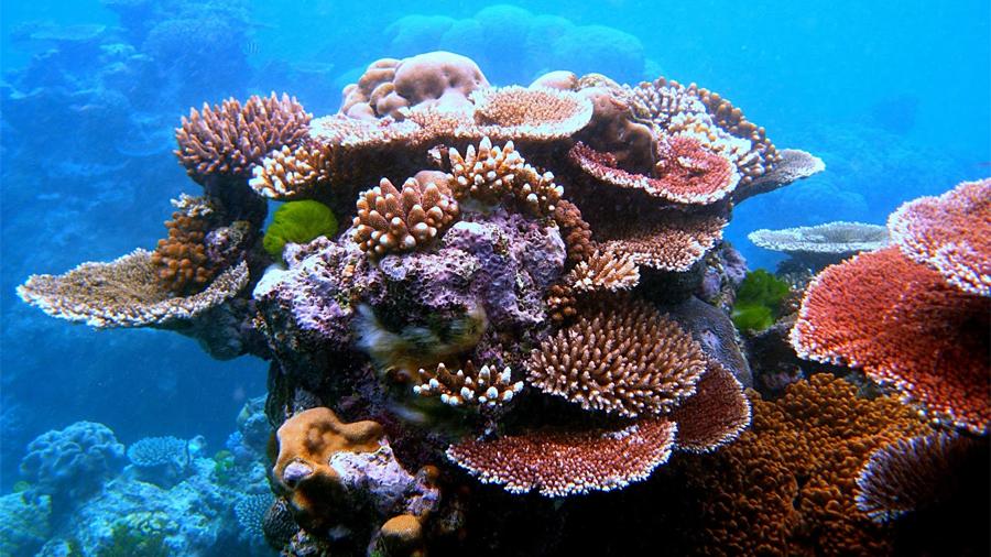 Innovación en restauración de arrecifes de coral en el Caribe Mexicano