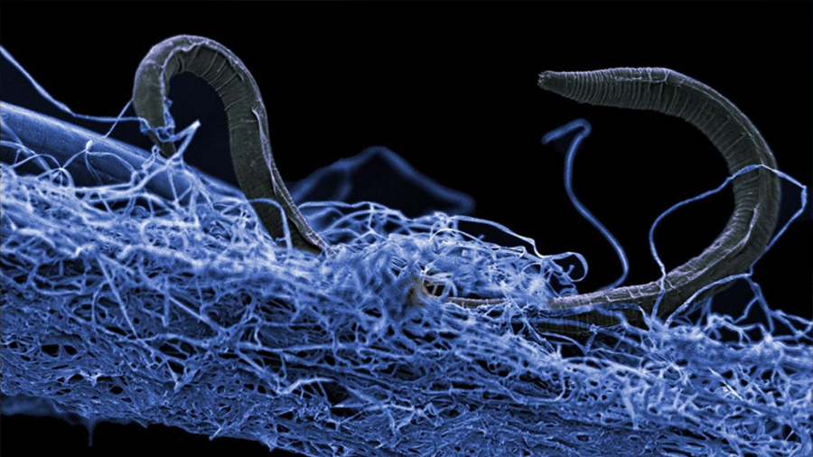Bacterias que se alimentan a base de energía nuclear podrían dar pistas sobre la vida en el espacio
