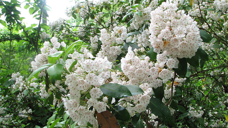 Unas flores catapultan su polen a gran velocidad