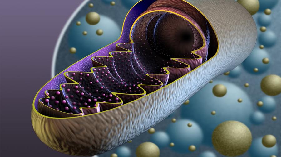 Científicos descubren cómo una molécula 'corrupta' puede desencadenar autoinmunidad