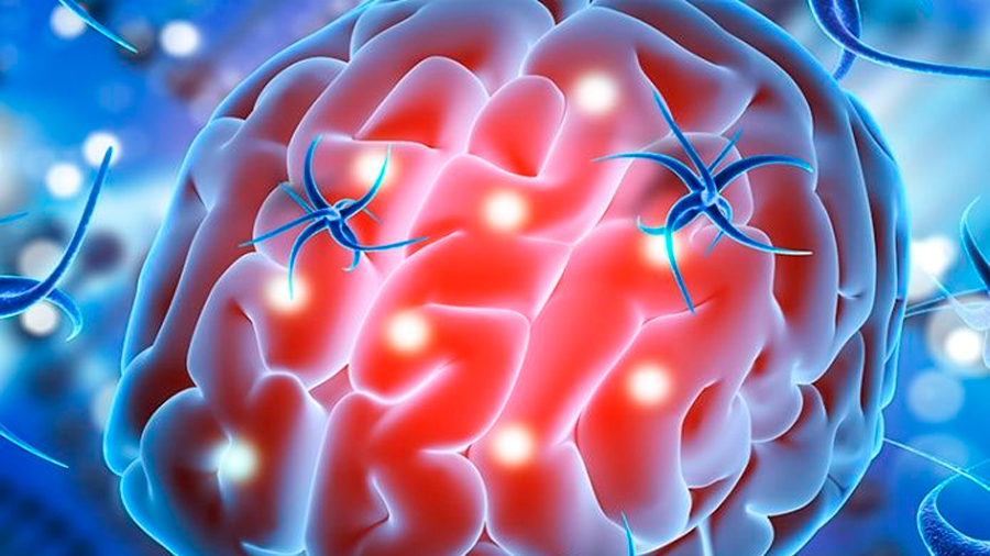 Investigadores logran reentrenar neuronas para funciones cerebrales superiores