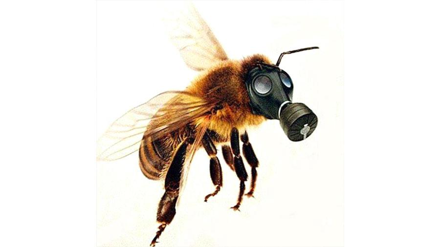 Confirmado: los pesticidas están matando en masa a las abejas