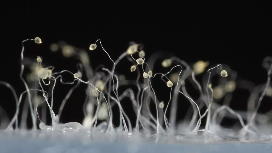 Investigadores evidencian adaptación social microbiana en su entorno natural