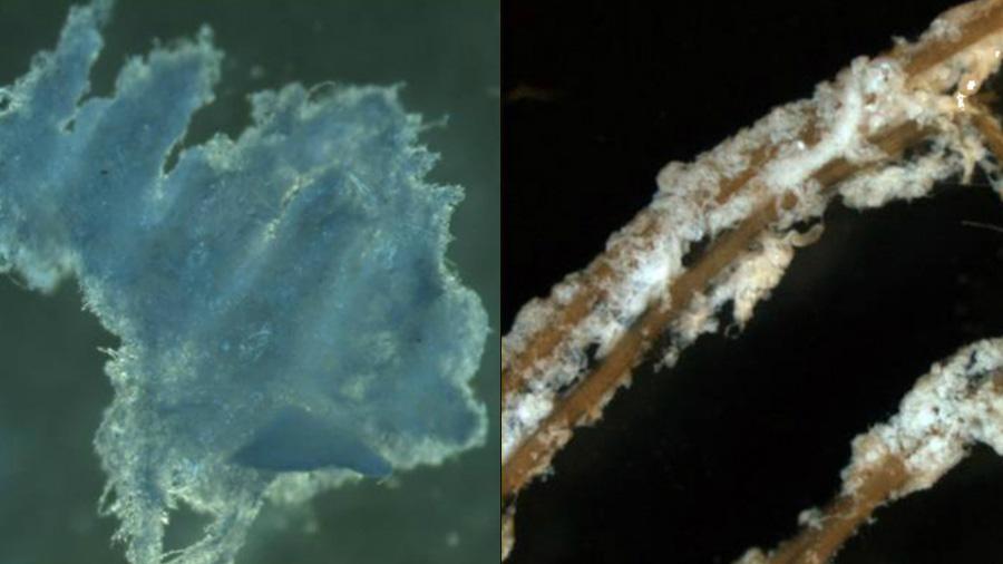 Científicos desarrollaron un biopolímero para sanar heridas en las plantas