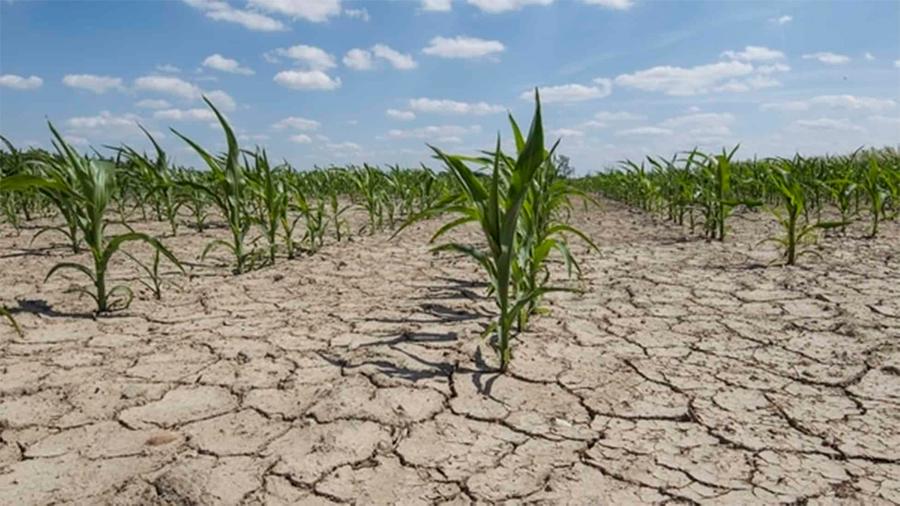 Cosechas que resisten la sequía tras modificar una proteína