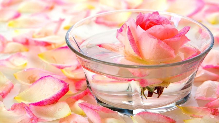 Mexicanos comprueban potencial anticancerígeno de la rosa de Castilla