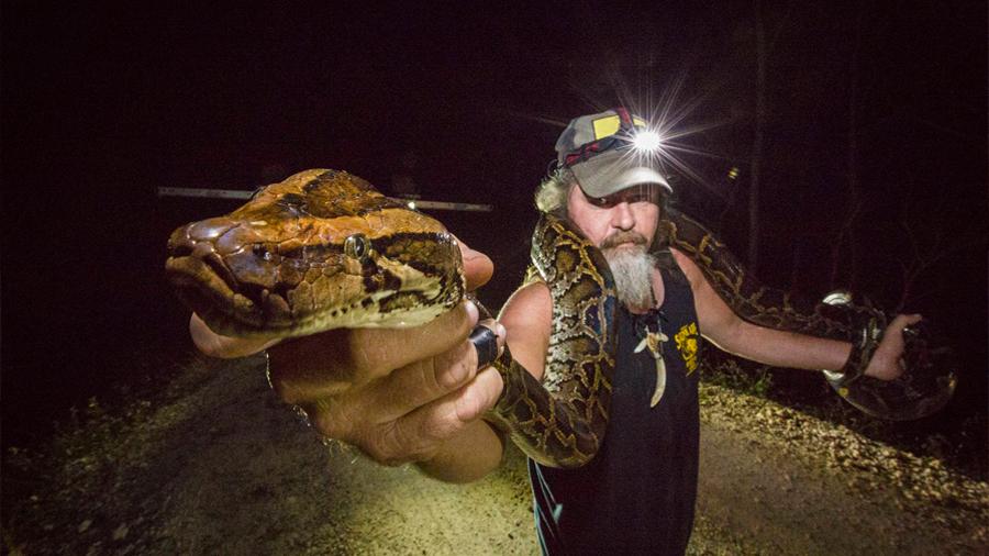 A la caza de la pitón birmana, la especie invasora que amenaza Florida